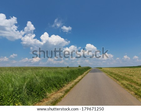 Road in the field. Summer Landscape.