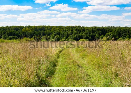 Road in the forest and sky in the daytime