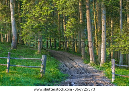 road in the forest, wooden fence, trees, village