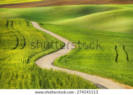 Road in the green field waves, South Moravia, Czech Republic