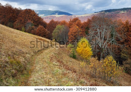 Road in the mountain forest. Autumn Landscape - stock photo