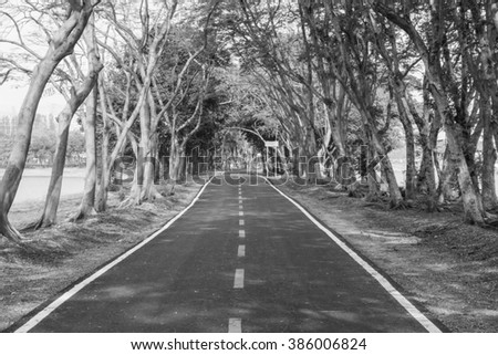 Road in the park black and white tone