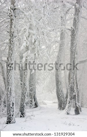 Road in the winter forest between the snow-covered trees - stock photo