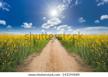 Road in the yellow flower fields with sun and blue sky - stock photo