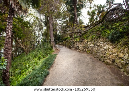 road in tropical forest  - stock photo