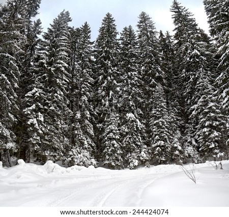 Road in winter fir-tree forest - stock photo
