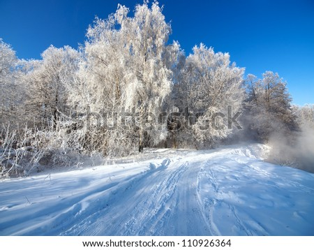 Road in winter forest. - stock photo