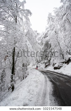 road in winter in Val Canali, in the natural park of Paneveggio - Trentino