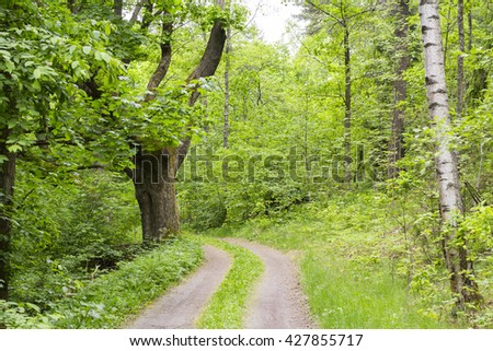 Road into the forest