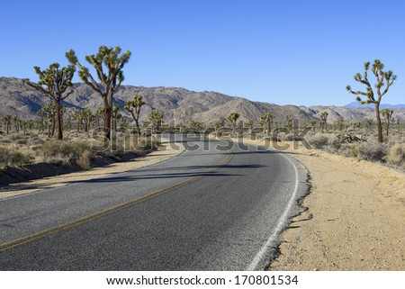 Road leading through Joshua Tree National Park. - stock photo