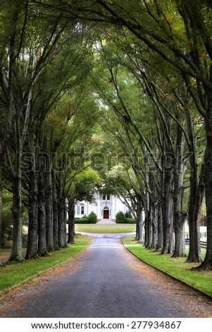 Road lined with a canopy of green trees leading to an old white plantation home with a red door.