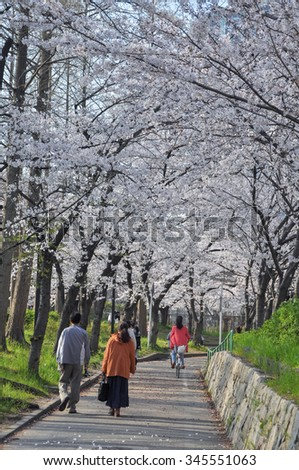 road lined with flowering cherry trees along the river in Osaka