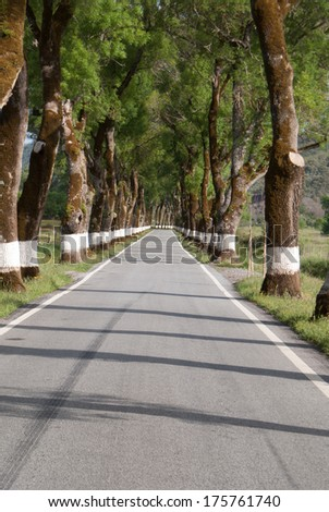 Road of green trees during spring time in the Portugal - stock photo