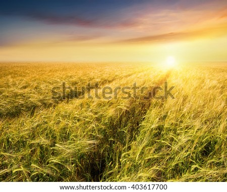Road on field. Agricultural landscape in the summer time - stock photo