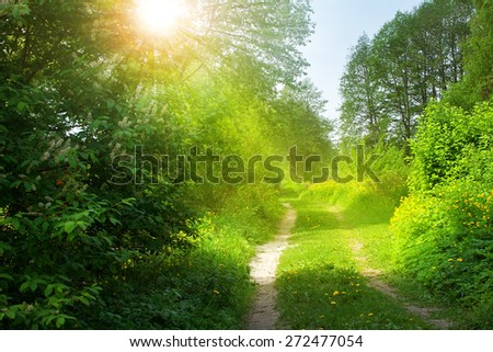 road on sunny spring day in the forest