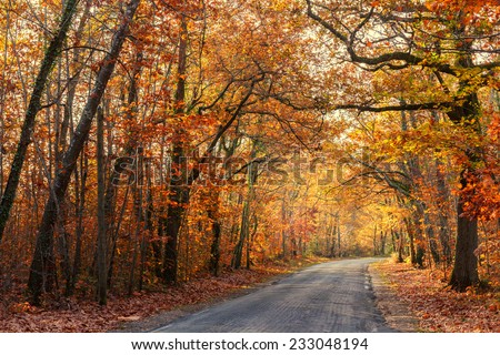 Road passing through a beautiful temperate forest at fall, France - stock photo