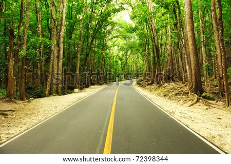 Road running through tropical rainforest - stock photo