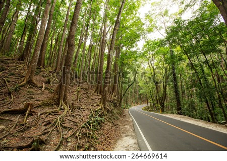 Road though Man made Forest at Bohol, Philippines - stock photo