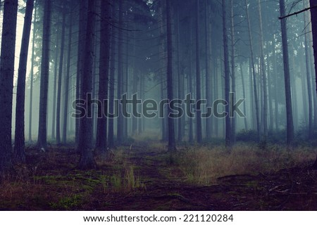 Road through a blue forest with fog and cold light - stock photo