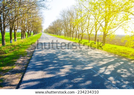 road through a bright forest - stock photo