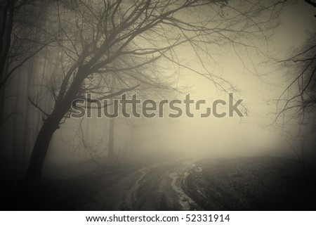 road through a dark forest - stock photo