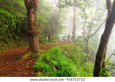 Road through a forest with fog and warm light, selective focus in the foreground