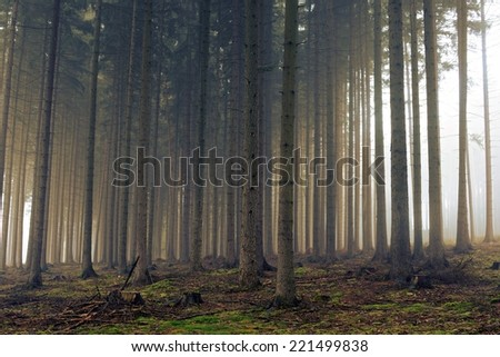 Road through a golden forest with fog and warm light