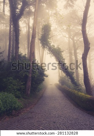 Road through a golden forest with fog and warm light. - stock photo