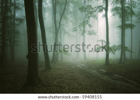 road through a green forest with old trees - stock photo