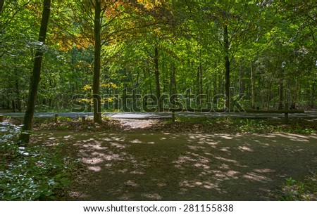 Road through a sunny forest in spring - stock photo