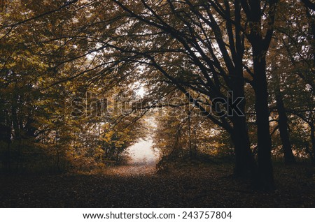 road through autumn forest  - stock photo
