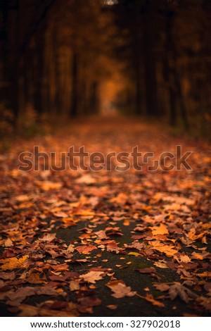Road through autumn park soft focus - stock photo