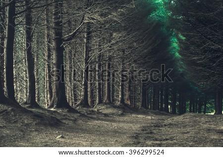 road through dark forest in autumn - stock photo