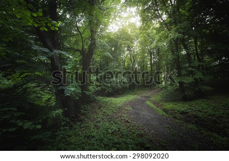 road through dreamy green forest - stock photo