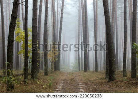 road through foggy forest at autumn, cloudy morning - stock photo