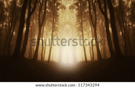 road through forest at sunrise - stock photo