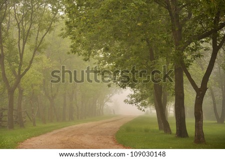 Road through green trees in the morning fog