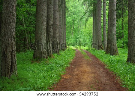 Road through old larch forest - stock photo