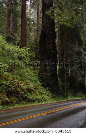 Road Through Redwood Forest in California - stock photo