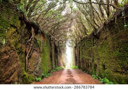 Road through rocks, Tenerife, Spain - stock photo