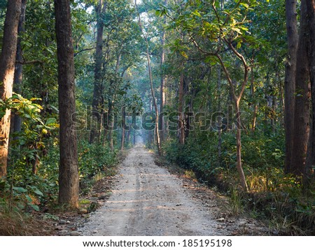 Road through sal forest in Bardia National Park, Nepal - stock photo