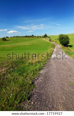 road through summer countryside