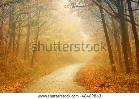 Road through the autumn forest - stock photo