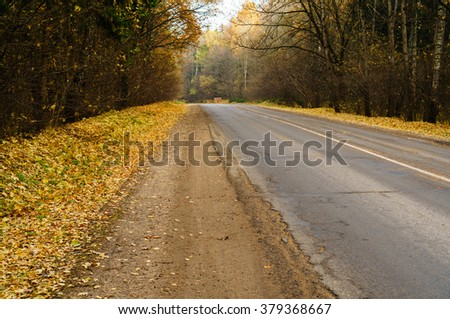 road through the autumn forest with yellow leaves