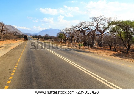 Road through the baobab forest valley in Tanzania on sunny day - stock photo