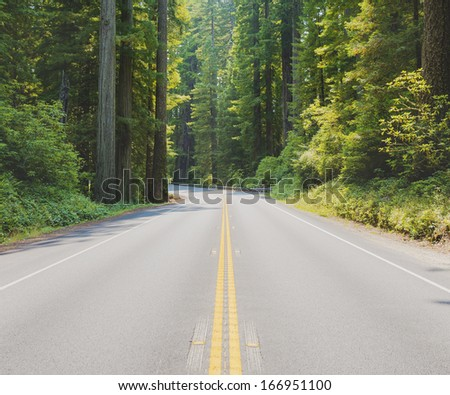 Road through the California Redwood Forest - stock photo