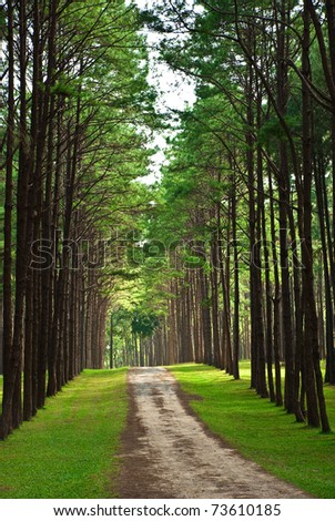 Road through the forest. - stock photo
