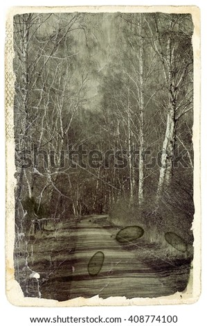 road through the forest, an old photograph