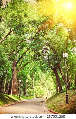 road through the green alley instagram stile - stock photo
