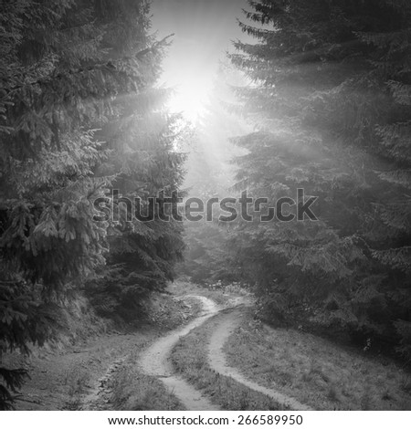 Road through the misty Carpathian forest. The way to the sunlight. Autumn weather. Black and white - stock photo